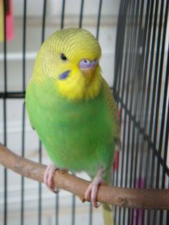 Kays_bird_006
